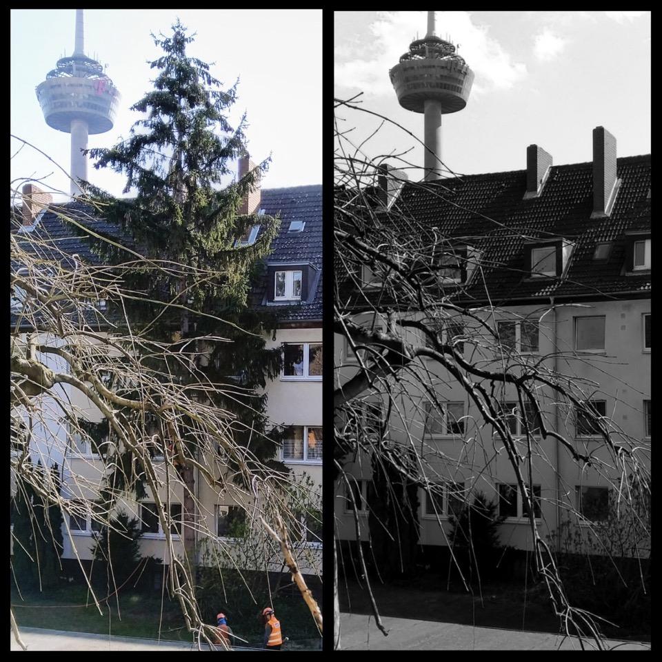 Zwei Hinterhof-Fotos aus dem selben Blickwinkel, links mit Baum, rechts schwarzweiß nach dem Fällen ohne Baum