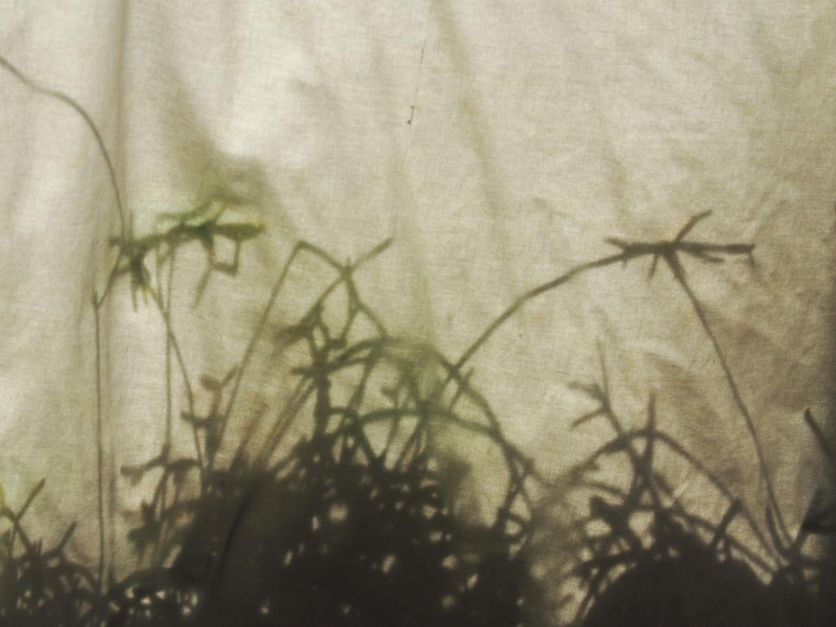 Auf einem Vorhang sind die Schatten von Sukkulenten zu sehen