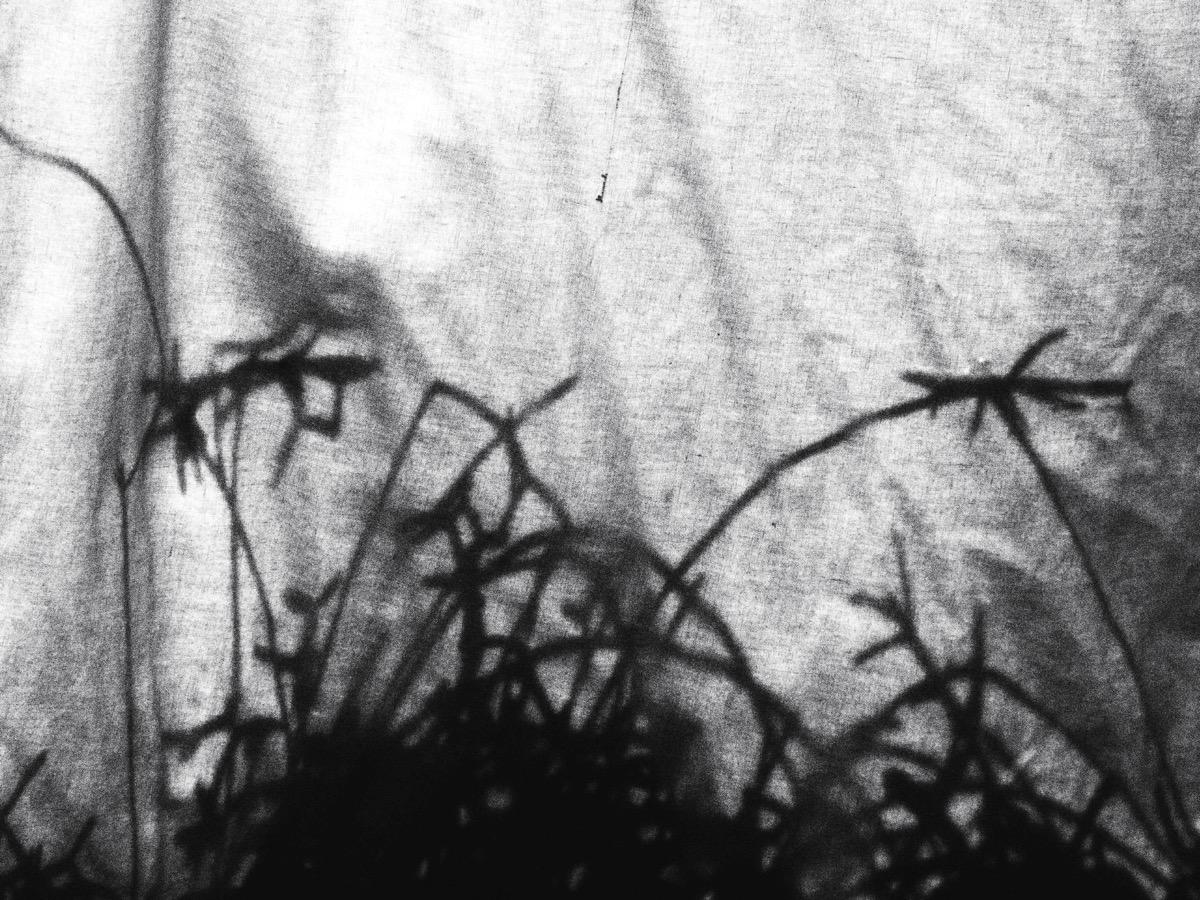 sw-Foto Auf einem Vorhang sind die Schatten von Sukkulenten zu sehen