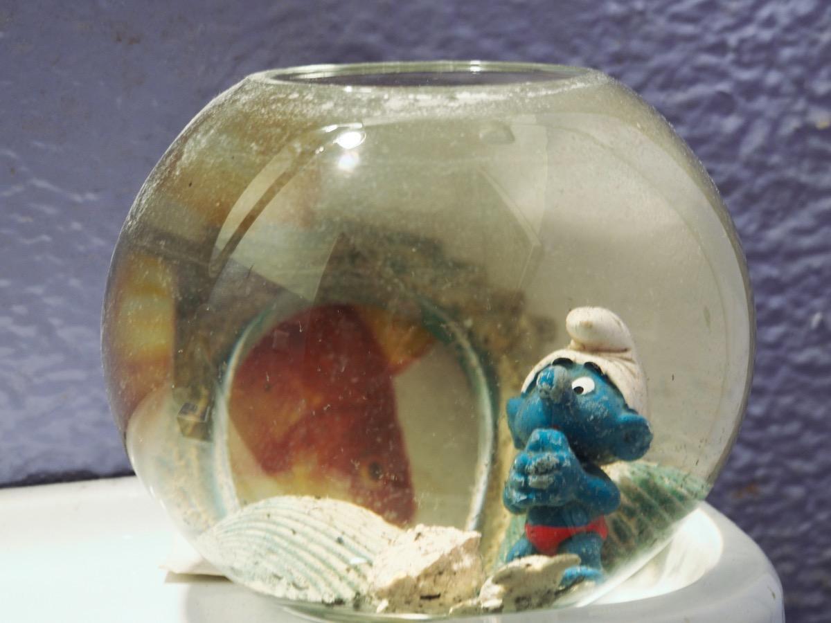 Eine Schlumpffigur steht in einem bauchigen Wasserglas, ein paar Muscheln und ein Fisch sind auch zu sehen.